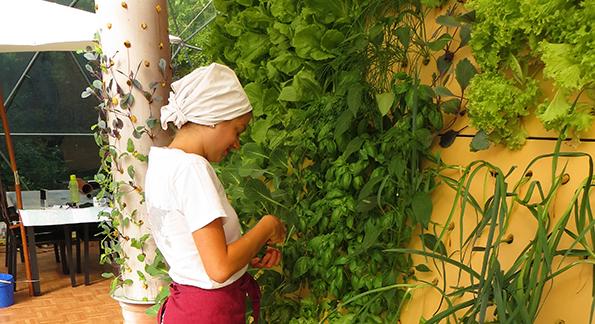 Växtkraft – ett nytt sätt att etablera församlingar