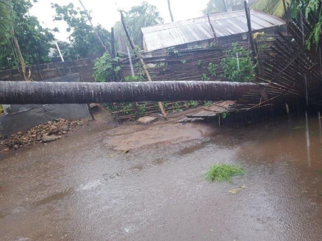 Det finns många nedfallna kokospalmer och vissa har orsakat dödsfall.