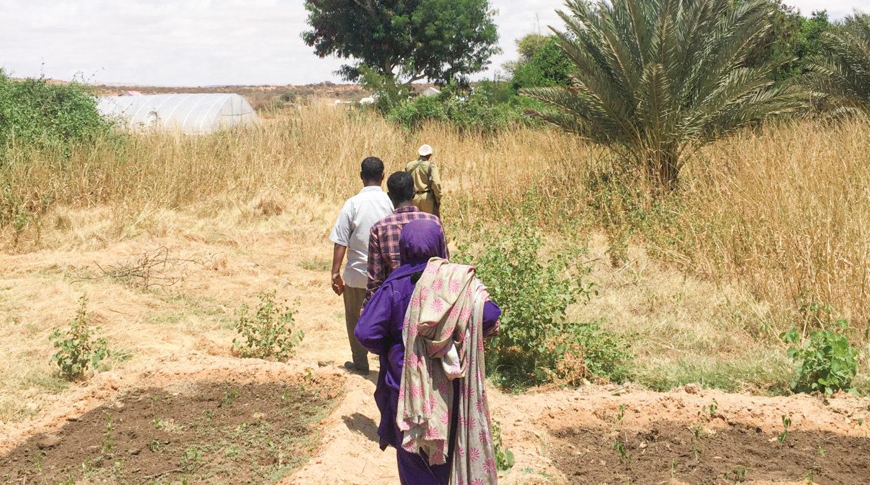 Klimatsmart odling i Somalia